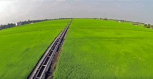 IOT PRECISION FARMING IN MALAYSIA